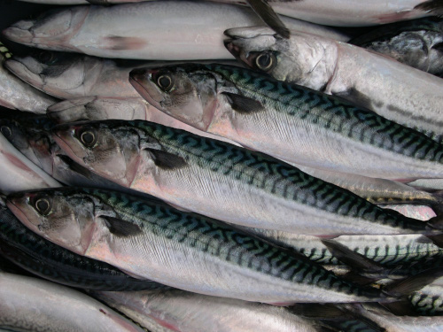 EM3 19 News Int Mackerel