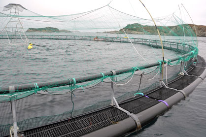 Aquaculture insurance – Is it worth it? - Coverage of