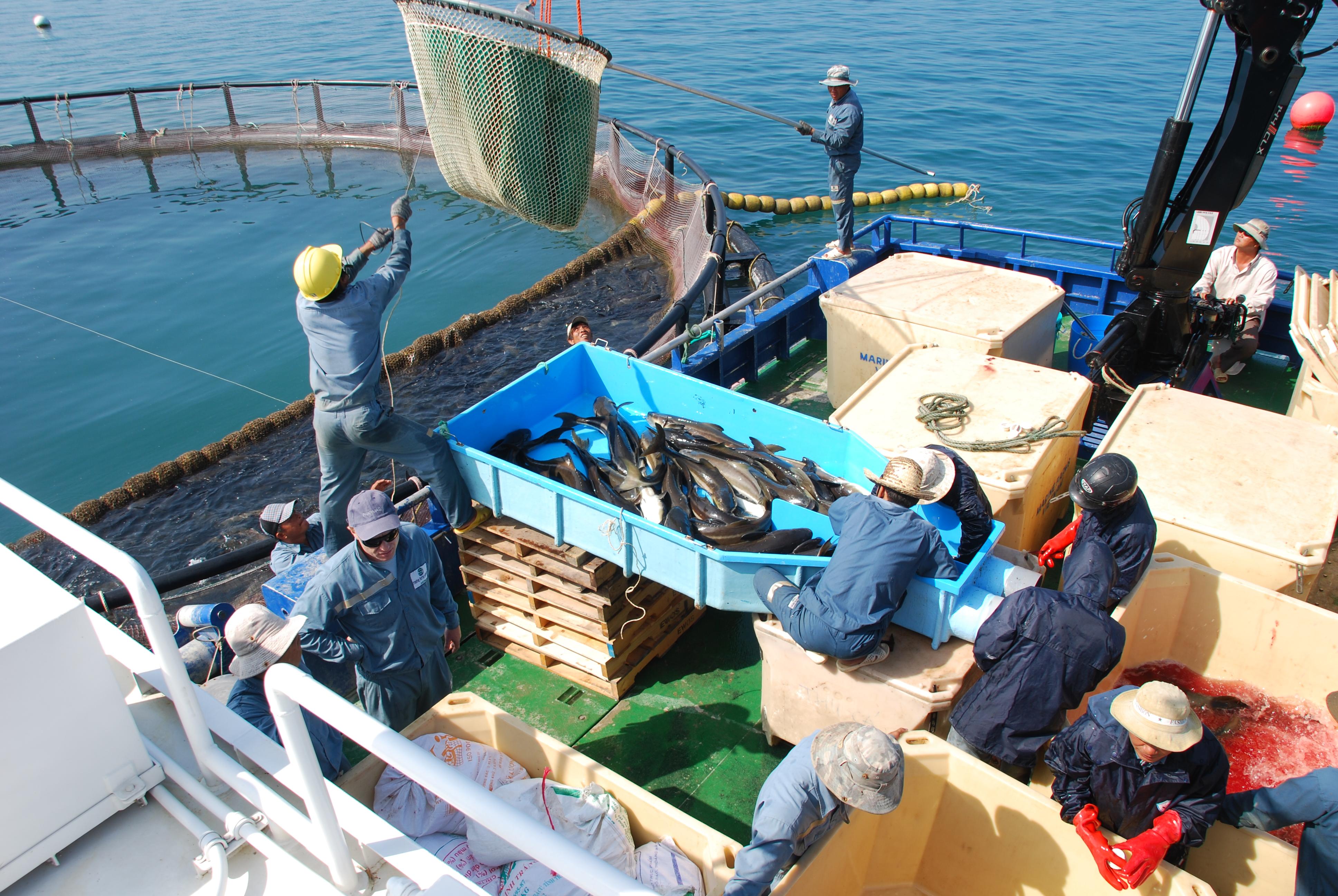 Production to rapidly grow at Marine Farms - Eurofish Magazine on