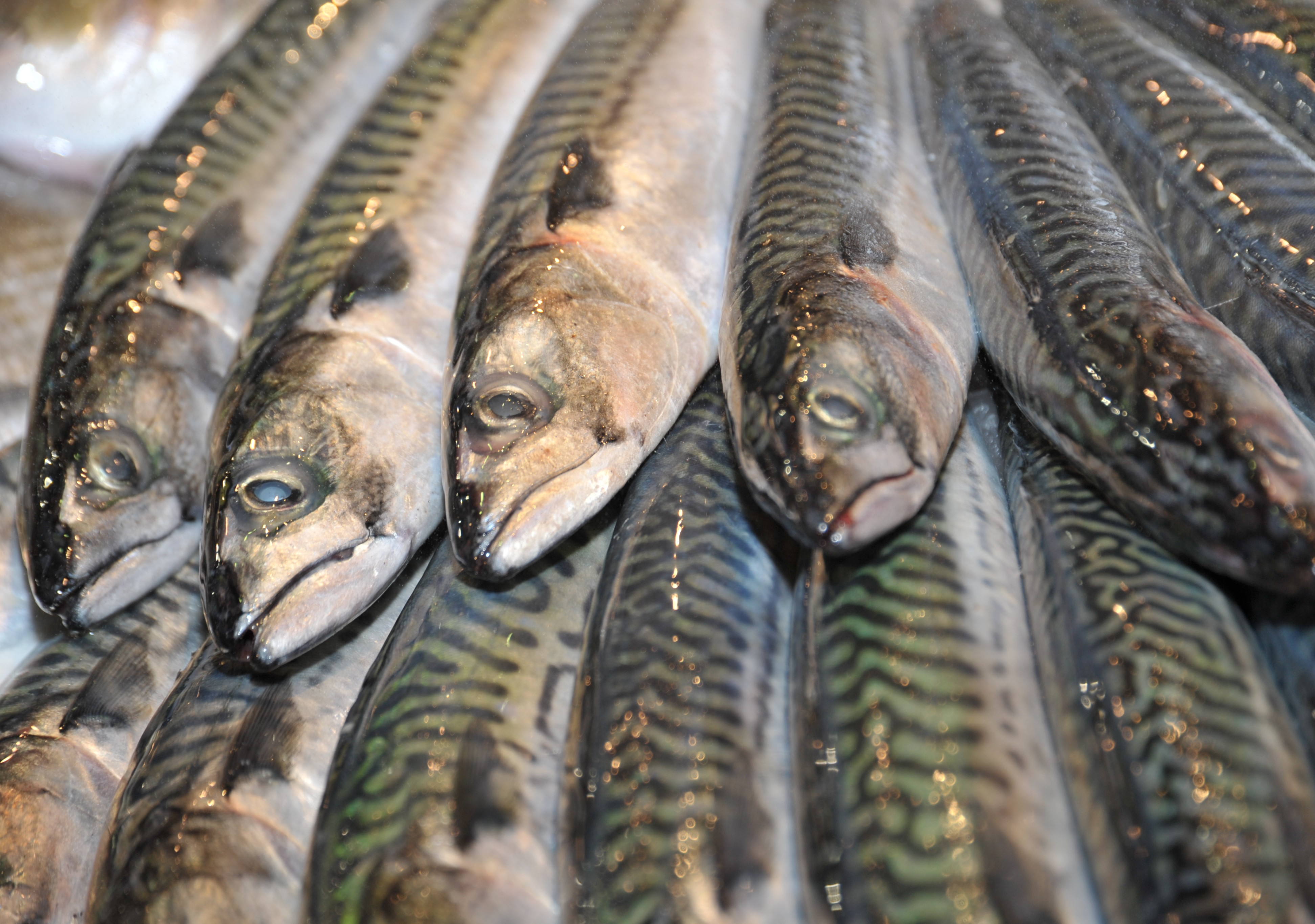 EU increases pressure on Iceland's fishery - Eurofish Magazine